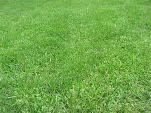 grass by xwattepoppl on deviantart