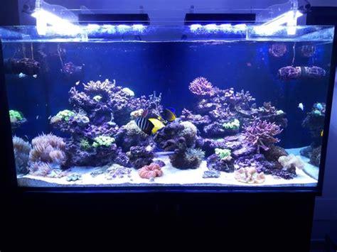 vasca acquario marino guida all allestimento di un acquario marino tropicale