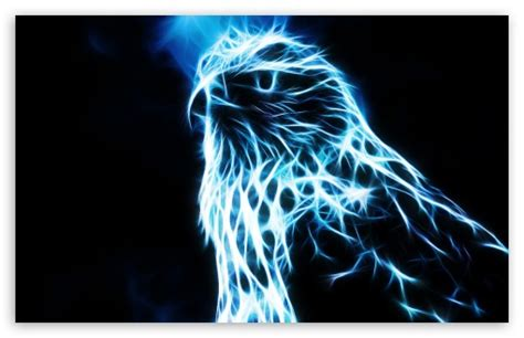 eagle hd desktop wallpaper widescreen high definition