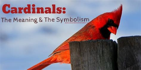 signs from spirit does my father visit me as a cardinal