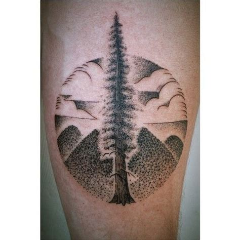 redwood tree tattoo 1000 images about redwood tree tattoos and drawings on