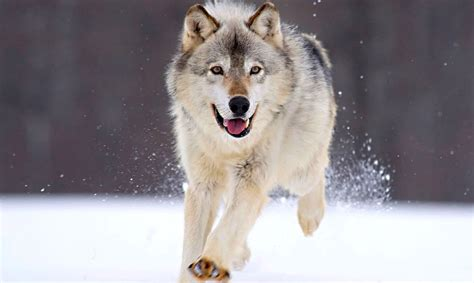 with hd hd animal wallpapers