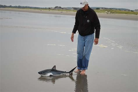 baby shark original biologist goes to the beach pulls off impromptu baby