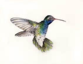 hummingbird drawing hummingbirds on sea printable cards