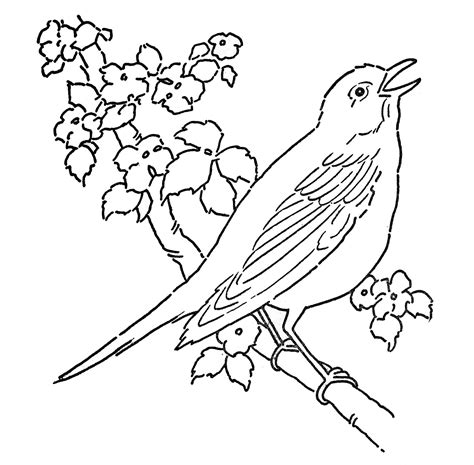 Line Art Coloring Page Bird With Blossoms The Line Coloring Pages