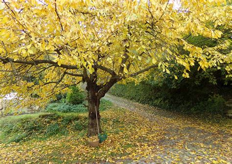Garten Pflanzen Winterfest Machen by Den Garten Quot Winterfest Quot Machen