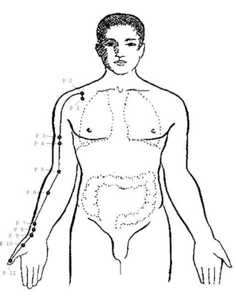 descargar e imprimir dibujos del cuerpo humano para colorear y pintar dibujo del cuerpo humano para colorear colorear dibujos