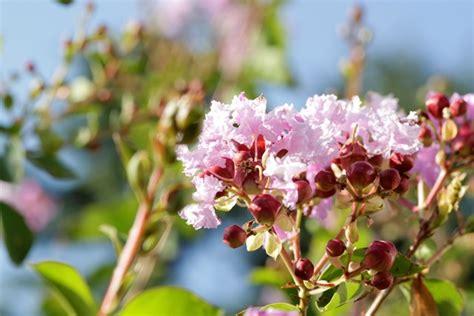 corso fiori di bach on line il corso su psico aromaterapia e fiori di bach oli