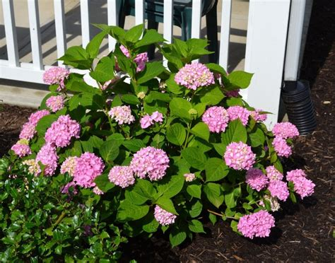 gardening on the porch pruning 36 best plants in my garden images on