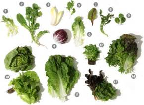 a visual guide to salad greens epicurious com epicurious com
