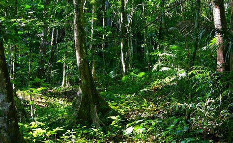 la selva tropical m 233 xico la selva forest wald selva tropical