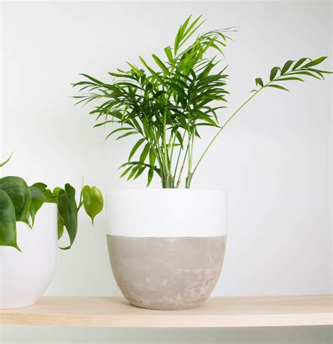 indoor plant pot indoor plants nz rent medium light plants and other