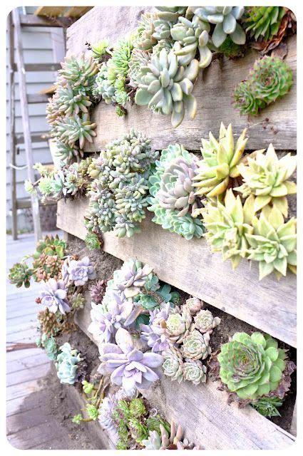 Vertical Garden Succulents 25 Best Ideas About Succulent Wall On