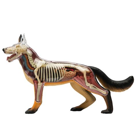 k 9 figure see what s inside s best friend with this anatomical