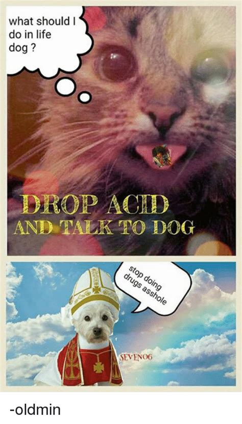 when do puppies drop what should i do in drop achd and talk to seveno6 oldmin dogs meme on