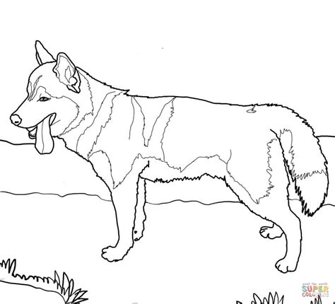 coloring pages of husky dogs siberian husky coloring page free printable coloring