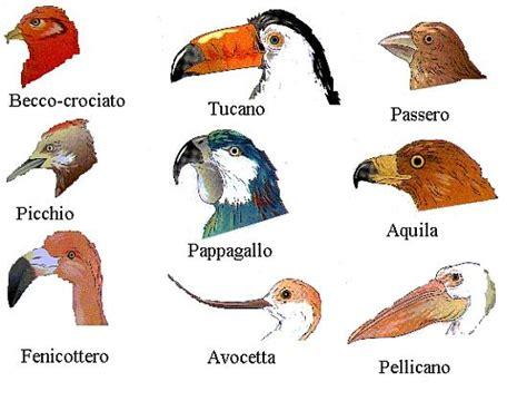 vari tipi di alimentazione scienz scuola il regno animale classificare e