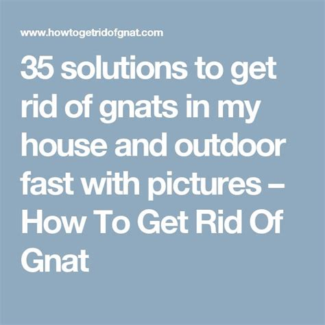 how to get rid of gnats in backyard 25 b 228 sta how to get rid of gnats id 233 erna p 229 pinterest