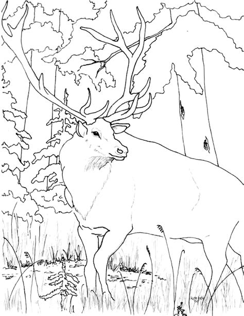 rocky mountain elk coloring page az coloring pages