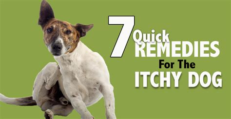 itchy remedies home remedies for itchy dogs
