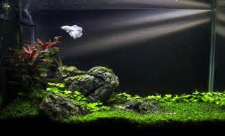 the fluval spec v monsterfishkeepers