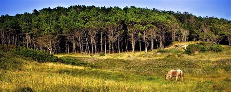 Les forêts millénaires Galice Espagne