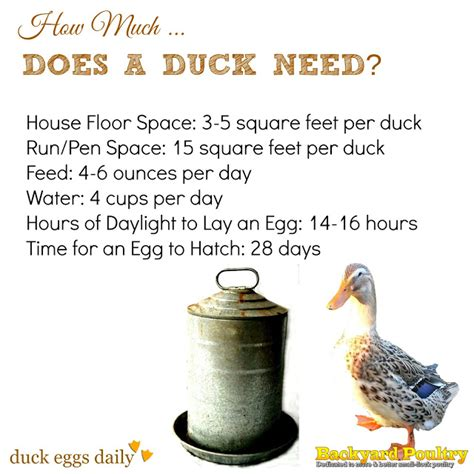 how much space do you need for a pool table how much space feed water light does a duck need