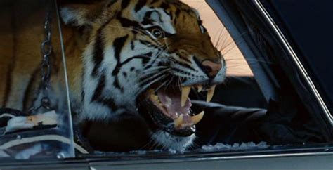 The Hangover Tiger In The Bathroom by Ludic Despair Recent Trends In Vehicular Cat Humor