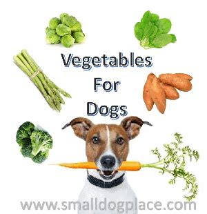 vegetables safe for dogs feeding dogs guide to small breed diet