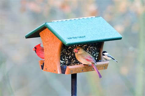 wild birds unlimited male and female cardinals remain in