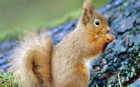 D Animaux of squirrel wallpaper 158241