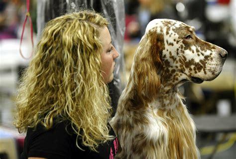 english setter dog show essays effluvia 135th westminster kennel club dog show
