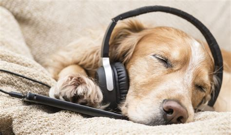 songs for dogs calming for dogs what is it and how can it benefit your