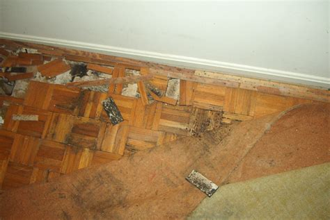 how to check your house for mold signs of mold in carpet meze blog
