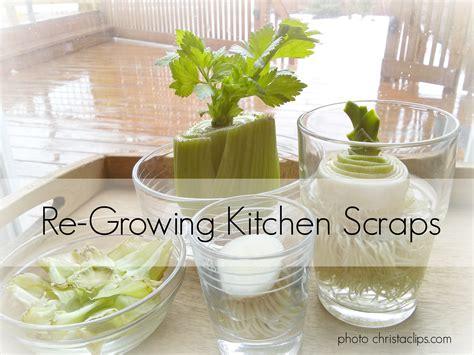 Re Growing Kitchen Scraps My Frugal Garden Christa Clips Vegetable Scraps In Garden