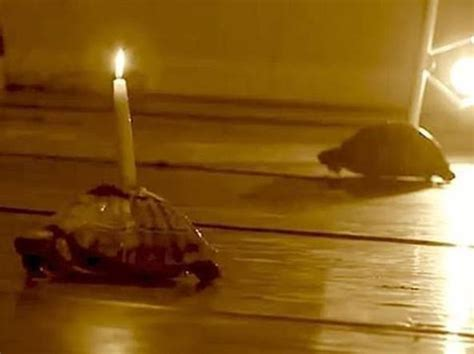 candele accese 171 candele accese sulle tartarughe 187 proteste contro la pi 232 ce