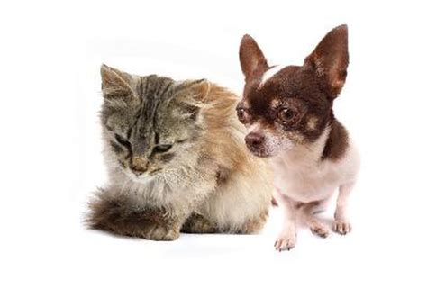 common house dogs can dogs cats catch human colds or viruses pets