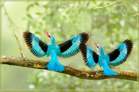 Exquisite Bird Photos Beautiful Bird Flying