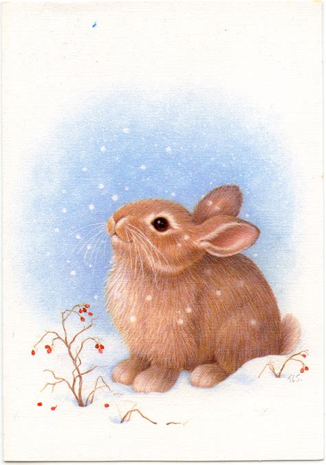 images of christmas rabbits a bunny rabbit and then 2 bunny rabbits greeting cards