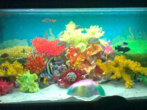 Lu Aquarium Ikan Hias teknologi budidaya ikan hias laut cara memelihara ikan