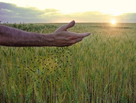 parable of the sower tljax
