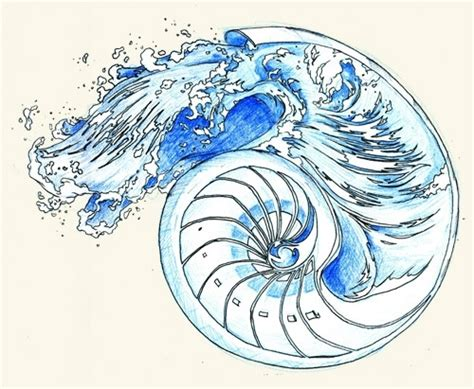 nautilus shell tattoo designs 17 best ideas about nautilus on