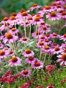 25 best ideas about hardy perennials on pinterest hardy