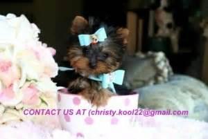 free puppies huntsville al dogs huntsville al free classified ads