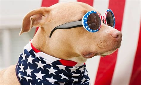 patriotic puppy 19 of the most patriotic pups america has known whiskey riff