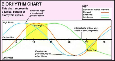 pattern theory llc do you know your biorhythm solid life fitness llc