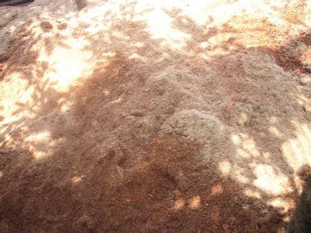 Bibit Jamur Tiram Sleman foto foto pembuatan bibit jamur tiram wadiyo sblog