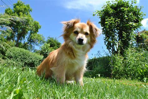 Urlaub Hund Eingezäunten Garten by Urlaub Mit Hund Wissenswerte Und N 252 Tzliche Tipps