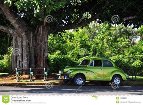 car with tree image car and tree stock photo image of nature tree cuba 15698986