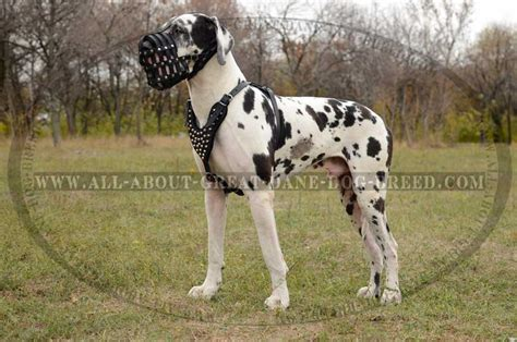 discover mesh dog basket leather muzzle for great dane at